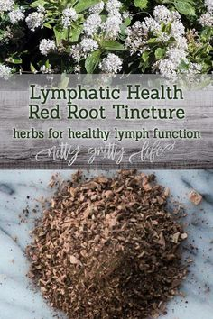 Herbal Remedies Warming, slightly spicy red root, Ceanothus americanus, is an outstanding lymphatic herb for those with chronic lymph complaints. Cold Home Remedies, Natural Health Remedies, Herbal Remedies, Cough Remedies For Adults, Cooking With Turmeric, Healthier Together, Herbal Medicine, Natural Medicine, Natural Remedies