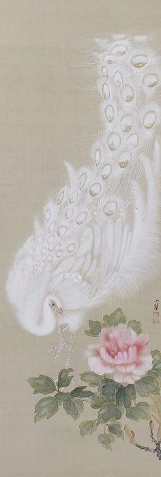 White Peacock, Kikuchi Shokin. Japanese hanging scroll painting