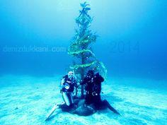 Evet yeni yıla geri sayım başladı ve yılbaşı ağaçlarımızı hazırladık bile : ) #denizisevkeyfinisur