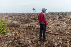 Trees Fell Faster in the Years Since Companies and Governments Promised to Stop Cutting Them Down - Inside Climate News Sources Of Greenhouse Gases, Agricultural Land, University Of Colorado, Tropical Forest, Tree Forest, Autumn Trees, Forests, Trees To Plant, Sustainability