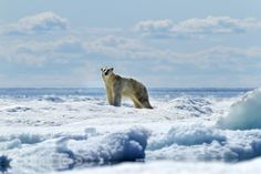 """Seattle-based photographer Paul Souders recently won the """"Animals in Their Environment"""" category in the prestigious Wildlife Photographer of the Year competition for his incredible image of a polar bear submerged in water"""