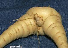 frutas e legumes estranhos -Batata doce