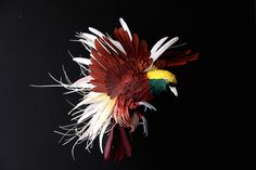 Colombian artist and illustrator Diana Beltran Herrera just continue amazed us by her intricate life-size paper birds. Using colorful paper, Diana Beltran Cardboard Paper, 3d Paper, Paper Crafts, Diana, Greater Bird Of Paradise, Architecture Origami, Book Art, Paper Birds, Bird Sculpture
