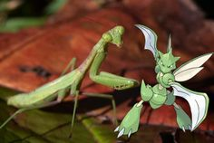 What's your favourite Pokémon? Pocket monster popularity reflects interest in real-world Biology – Journal of Geek Studies