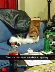 Funny Pictures to Make You Laugh Out Loud 21