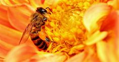 EPA Gets Surprise Delivery Of Millions Of Dead Bees - http://conservativeread.com/epa-gets-surprise-delivery-of-millions-of-dead-bees/