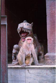 deux singes?