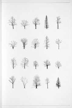 Katie Holten: Trees of the USA