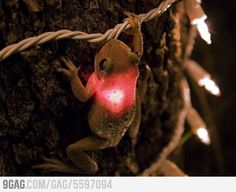 a crazy tree frog!