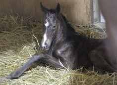 3月9日午前3時過ぎ、父トーセンジョーダンの牝馬が、誕生しました。