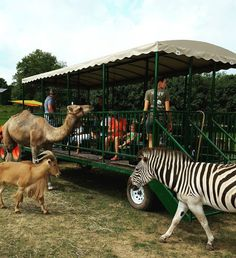 See Over 150 Animals At Aikman Wildlife Adventure, A Lovely Family Day Trip Destination In Illinois Best Places To Camp, Places To Go, Weekend Trips, Day Trips, Weekend Getaways, Zion Illinois, Central Illinois, Zion Camping, Camping Cabins