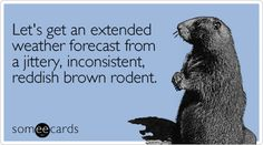 Let's get an extended weather forecast from a jittery, inconsistent, reddish brown rodent.