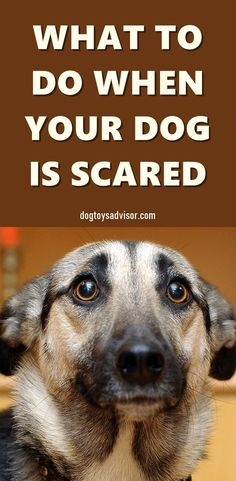 Does your dog lack confidence? Is he overly submissive and anxious around other dogs? If so chances are your dog could benefit from some confidence building exercises. Find out how to boost your dog's confidence. Dog Health Tips, Dog Health Care, Puppy Care, Dog Care, Diy Pour Chien, Dog Psychology, Pet Sitting Business, Dog Anxiety, Pet Care Tips