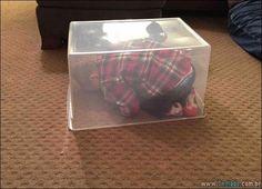 35 crianças que são mestre na brincadeira esconde esconde >>  http://www.tediado.com.br/03/35-criancas-que-sao-mestre-na-brincadeira-esconde-esconde/