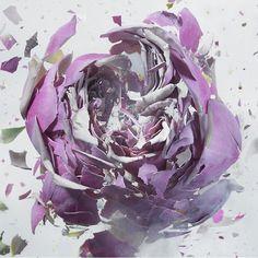 Rapid Bloom: Liquid nitrogen exploding flowers photographer Martin Klimas
