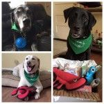 Happy Members with WagSwag! Only Big Bark sends out high quality big dog approved toys in every quarterly box!