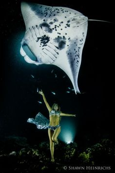 Giant mantas, sea gypsy share dance in stunning, one-of-a-kind film