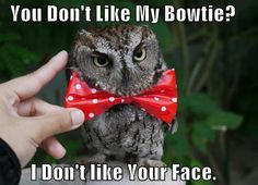 You don't like my bowtie?