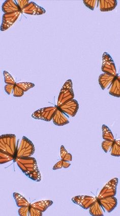 MIGRATION in 2020 (With images)   Butterfly wallpaper ...
