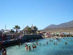 Tototalillo Coquimbo (Chile) #sinbadtrips