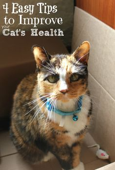 How do you make sure your pets are healthy and happy? These tips to improve your cat's health will start you on the road to a healthy happy cat.