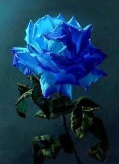 Blue Rose ♥