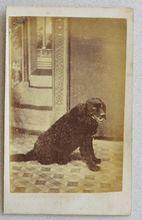 Cartes-De-Visites Dog Photograph