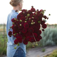 We are a family run flower farm specializing in growing unique, uncommon and heirloom flowers. Dark Flowers, Types Of Flowers, Beautiful Flowers, Hand Tied Bouquet, Flower Farm, Summer Beauty, Green Garden, Plants, Wedding Bouquets