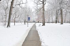snow white campus