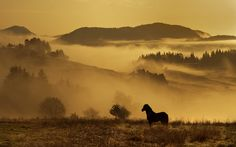 Early Morning, high in the heart of the Rhodope Mountains, Bulgaria