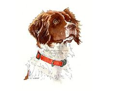 Brittany Spaniel Custom Dog Drawings Portraits Pen and Ink Watercolor Hunting Dogs Gift Idea Dog Lovers Pet Memorial Cat Portraits Birds Custom Dog Portraits, Pet Portraits, Englisch Springer Spaniel, Brittany Spaniel Dogs, Animal Drawings, Dog Drawings, Drawing Animals, Dog Paintings, Pet Memorials