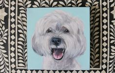 """DAY 26 – DOG-A-DAY – MEET """"ZIGGY"""" THE HAPPY HAVANESE 