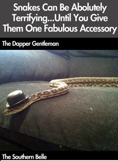 Still terrifying, but funny! Snakes In Hats! (26 Pics)