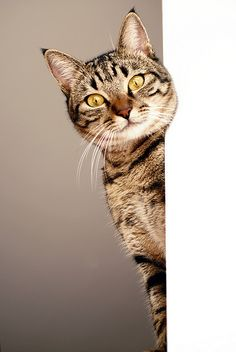 MisKet-Looking at You by E.L.A, via Flickr