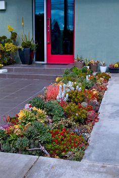Beautiful Front Yard Succulent Garden