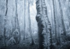 Frost Blankets Over Trees in Forest Photography by: Jan Bainar