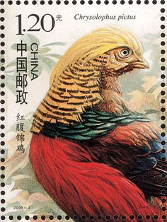 Stamp: Golden Pheasant (Chrysolophus pictus) (China, People's Republic) (Birds of China) Mi:CN 3946 Golden Pheasant, West Art, Vintage Stamps, Penny Black, Stamp Collecting, Bird Art, Pet Birds, Gallery, Hobbies