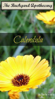 The Backyard Medicine Cabinet: Calendula