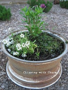 Chipping with Charm: Slowly, but Surely...out front... Tire rim planter
