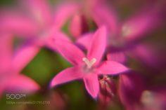 Small pink stars -