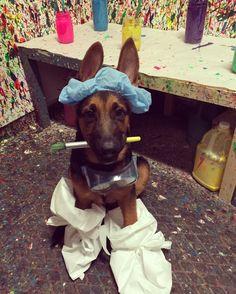 Look who came into splatter today! Brody man.  #puppygram #highstreetaz #scottsdale #phoenix #pinspirationaz #splatterroom #splatterdate