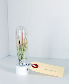 So cool & geeky.  Air plants are the best!