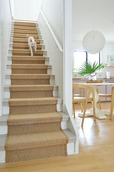 Staircase Landing, Entry Stairs, Basement Stairs, House Stairs, Basement Ideas, Stair Runner Installation, Carpet Installation, Stairway Carpet, Carpet Stairs