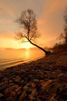 """landscape-lunacy: """" Slovakia - by Peter Oslanec """" Single Tree, Summer Days, Photo S, Sky, Warm, Sunset, Landscape, Night, Photography"""