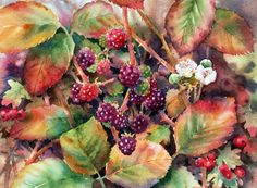 autumn hedgerows | Autumn Hedgerows...a blackberrying we will go!