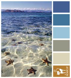 Starfish 3 - Blue, sky, grey, brown - Designcat Colour Inspiration Pallet