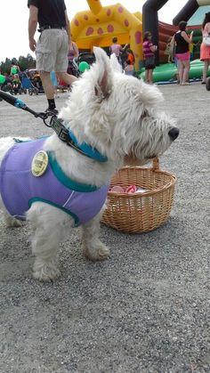 Onni on juuri saapunut Limusille! #Limuset Dogs, Animals, Animales, Animaux, Pet Dogs, Doggies, Animal, Animais