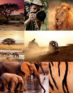 Spring/Summer 2014: Geo-Safari