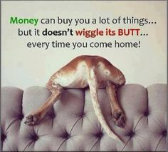 Money can buy you a lot of things... but it doesn't wiggle its butt every time you come home!