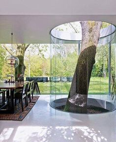 Tree Growing Inside The House Surrounded By A Glass Cylinder home trees modern living room interior design interesting home ideas modern homes tree house home decorating living rooms